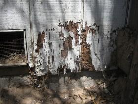 Daños de termitasTermitas